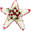 Star Tribute in Red and White